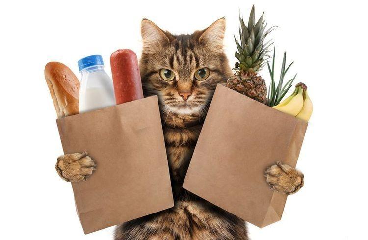 Натуральное питание для кошек