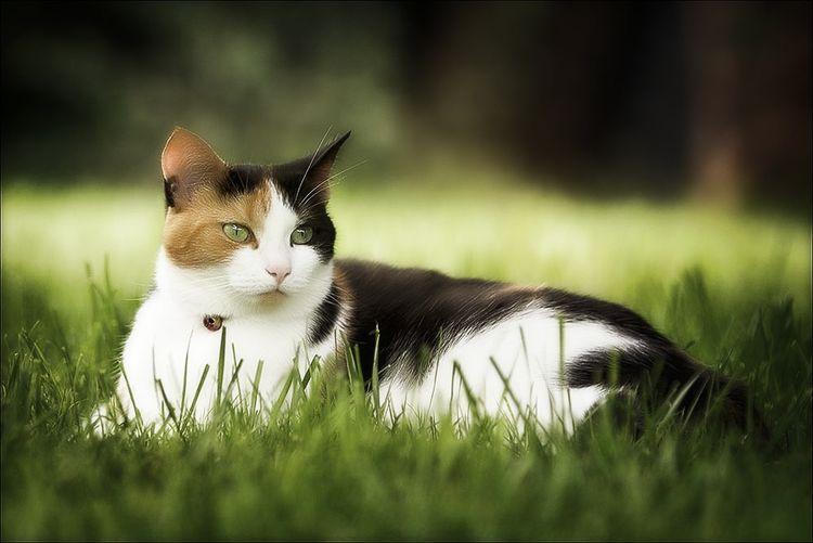 Коша лежит в траве