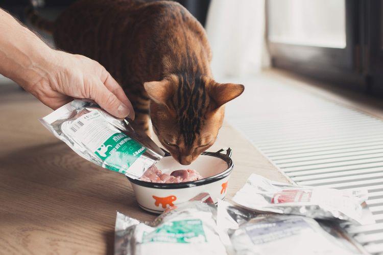 Кот ест натуральный корм