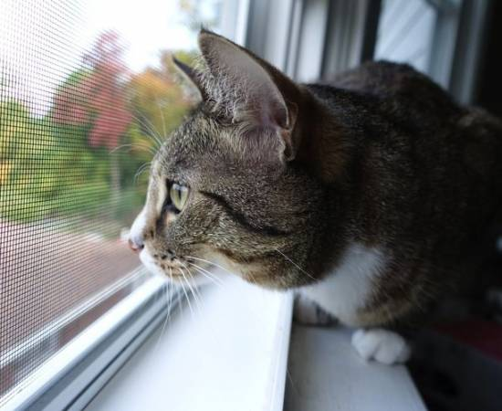 Защита от кошек на окна