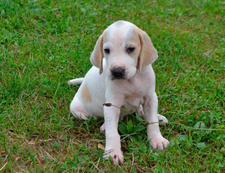 порселен щенок