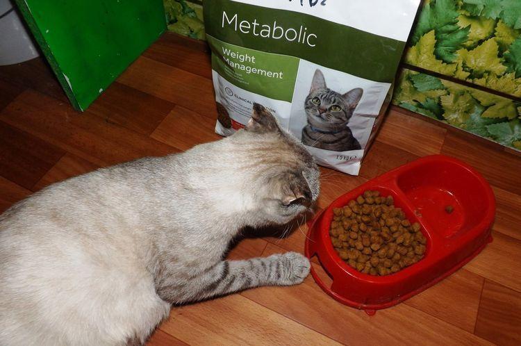 Кот ест корм Hills Metabolic