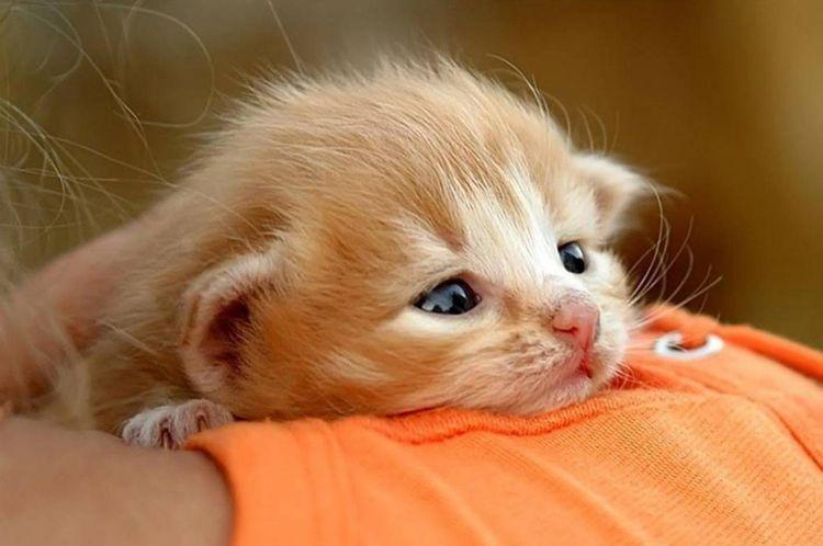 Котенок плачет
