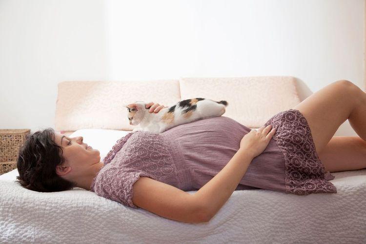 Трехцветная кошка лежит на беременной девушке