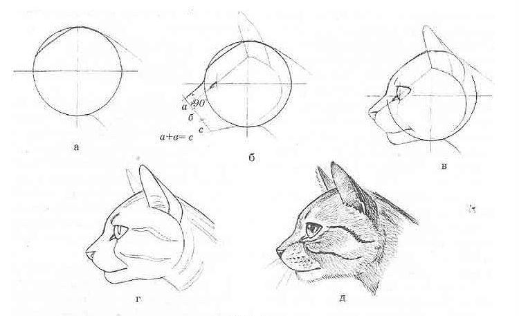 Рисунок морды кошки в профиль