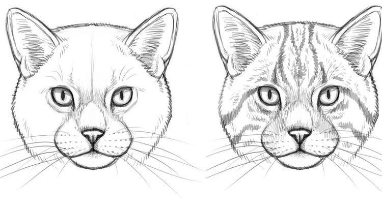 Рисунок кошачьей морды