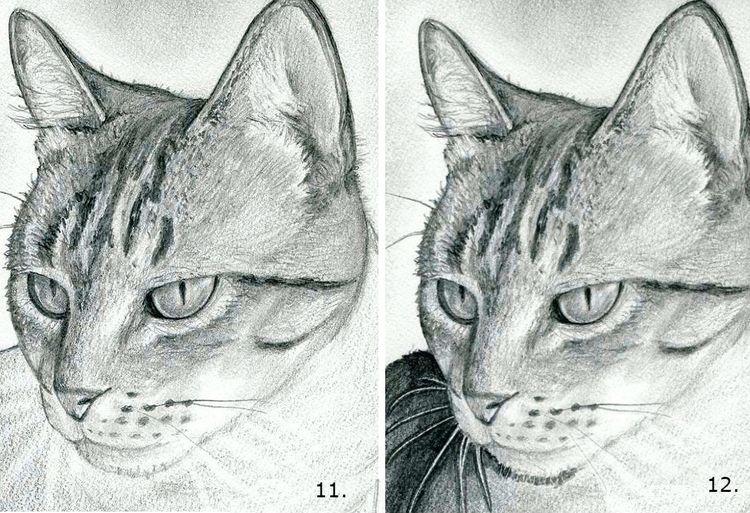 Как пошагово нарисовать морду кошки
