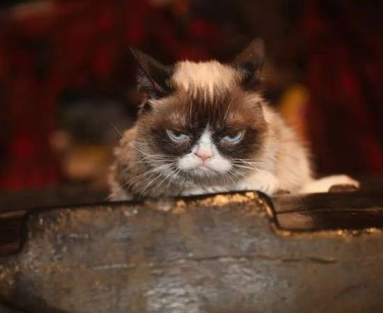 Самая сердитая кошка Грампи Кет
