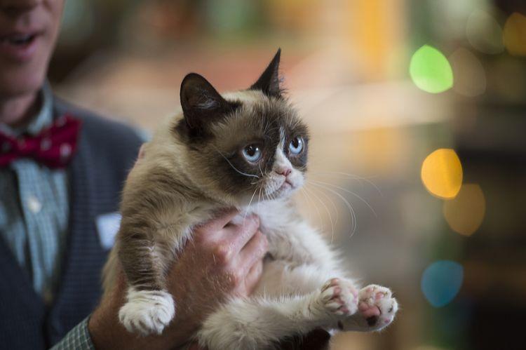 Самая сердитая кошка в мире