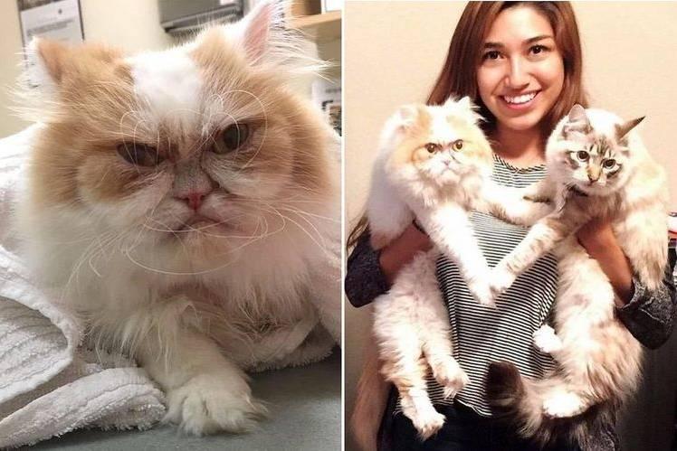 Сердитый кот Луи из Техаса