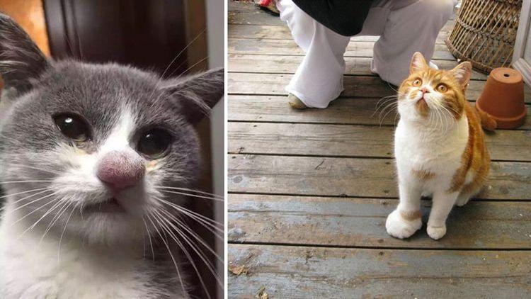 Кота укусила оса: симптомы
