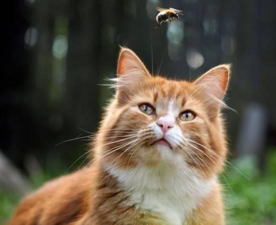 Кот и оса
