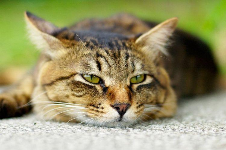 Кот лежит на подстилке