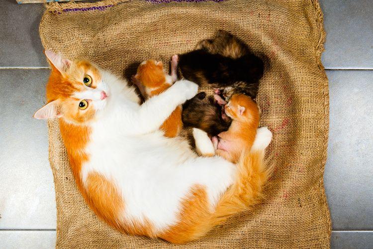 Рыжая кошка и котята