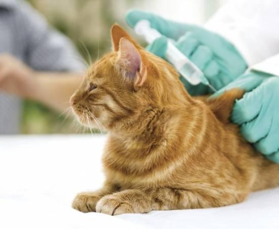 Квадрикат для кошек