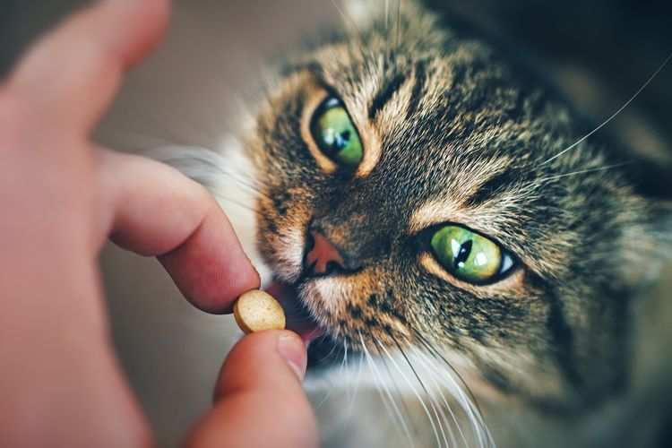 Коту дают таблетку