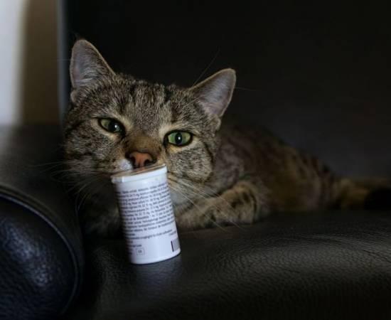 Противозачаточные для кошек