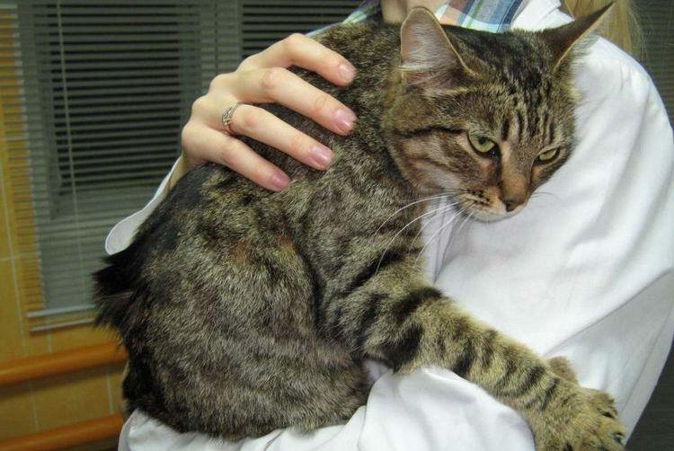 Помощь кошке при судорогах