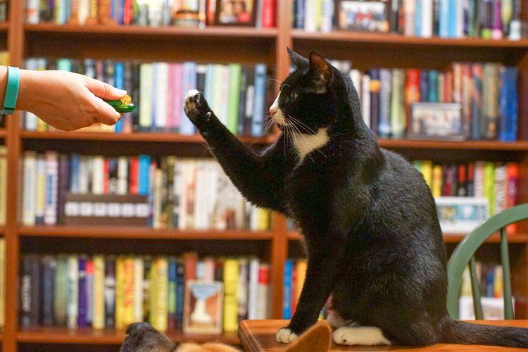 Как научить кошку давать лапу