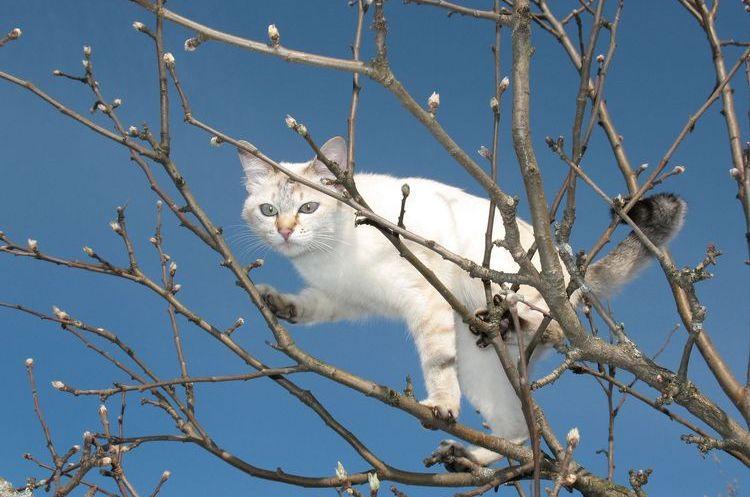Белый кот залез на дерево