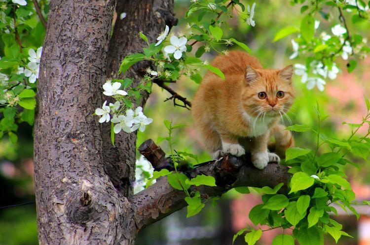 Рыжий кот высоко на дереве