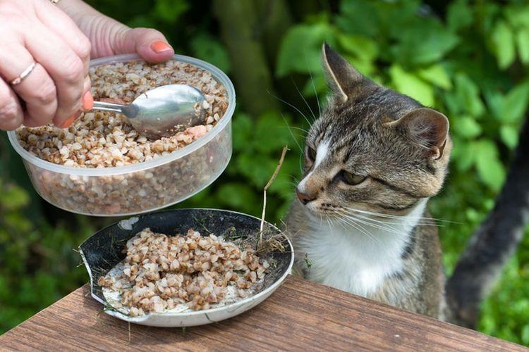 Коту насыпают гречку