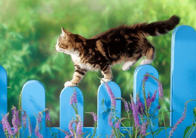 Кот гуляет по забору