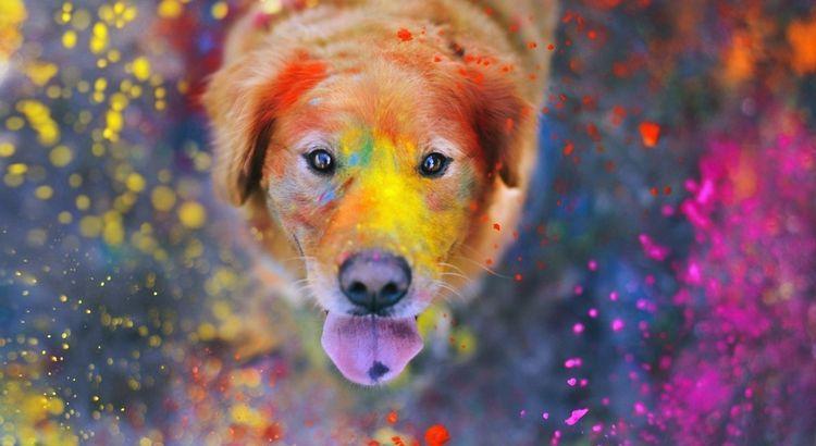 Собака съела краску