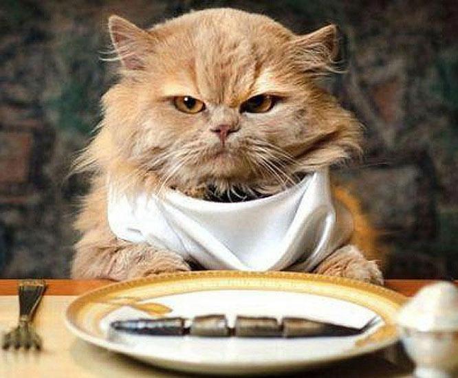 Что делать если кот не ест и не пьет только спит