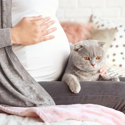Токсоплазмоз у кошек и котов