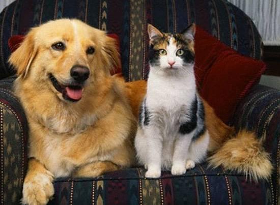 Делают ли аборт кошкам и собакам