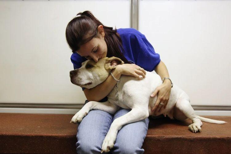 Собаку усыпляют в клинике