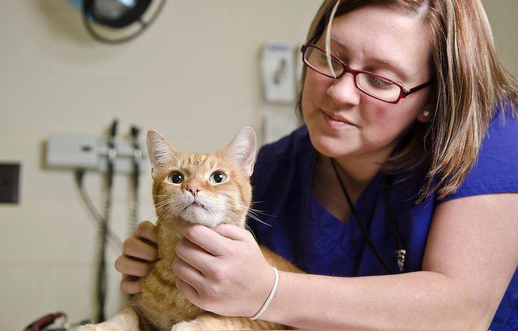 Антигистаминные таблетки для кошек