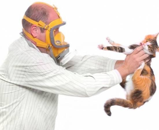 У мужчины аллергия на кошек
