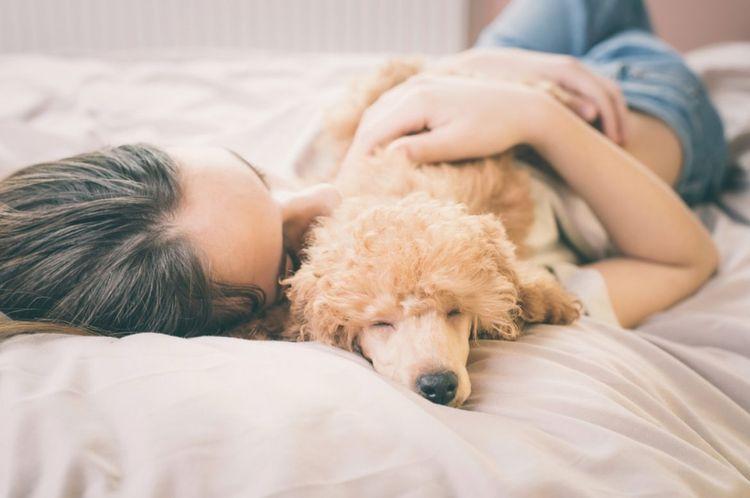 Девушка спит в кровати с пуделем