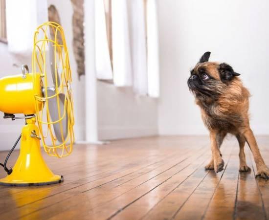 Как охладить собаку в жару