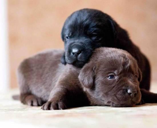 Новорожденные щенки открыли глаза