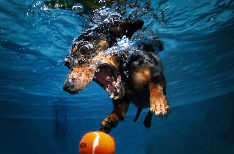 Собака купается в бассейне