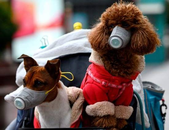 Защита собаки от коронавируса