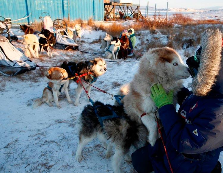 Чукотские ездовые в школе каюров