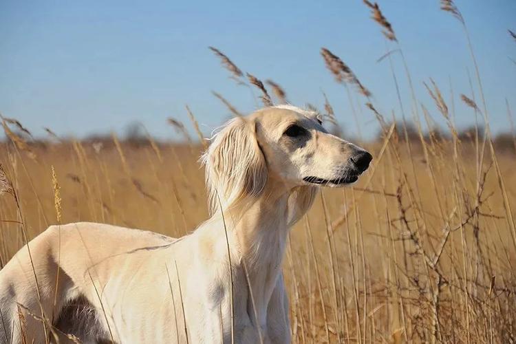 Самая древняя порода собак