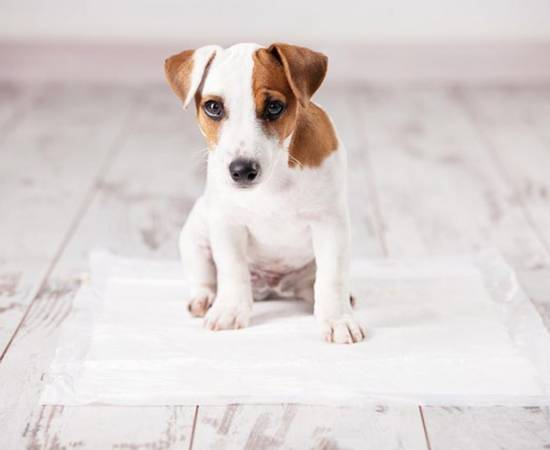 Собака на пеленке