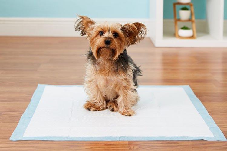Приучить собаку к туалету на пеленку