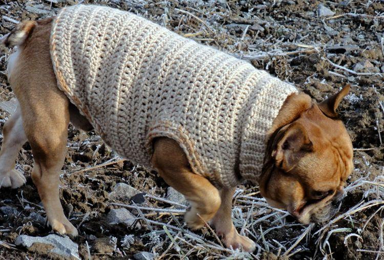 Свитер для собаки крючком