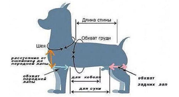 Снятие замеров с собаки