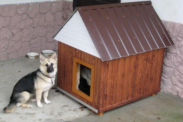 Пес у будки