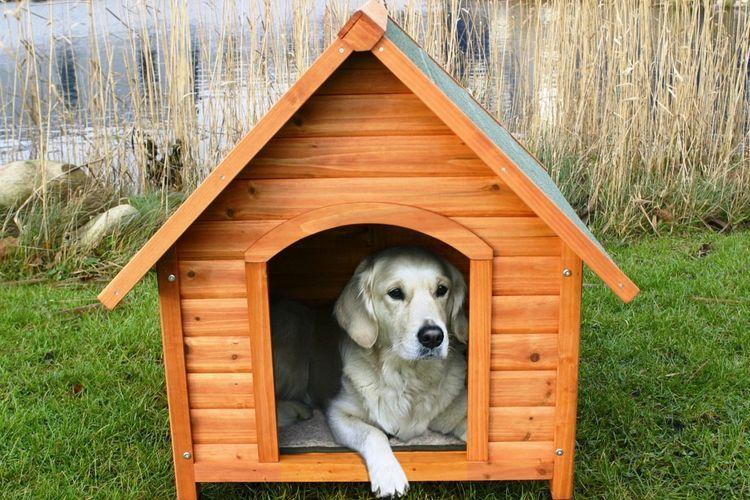 Собака в своей будке