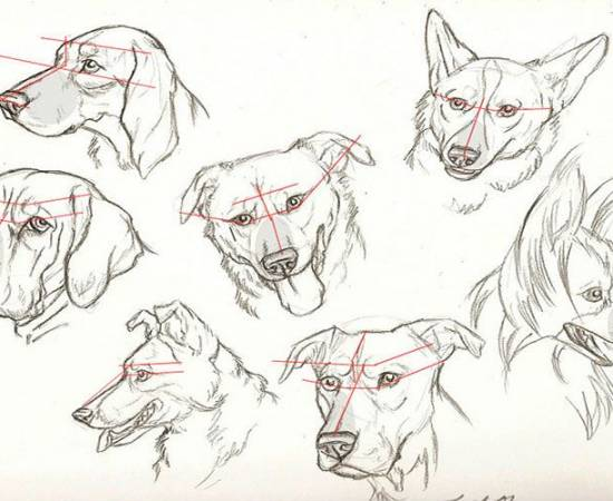 Нарисованные собаки