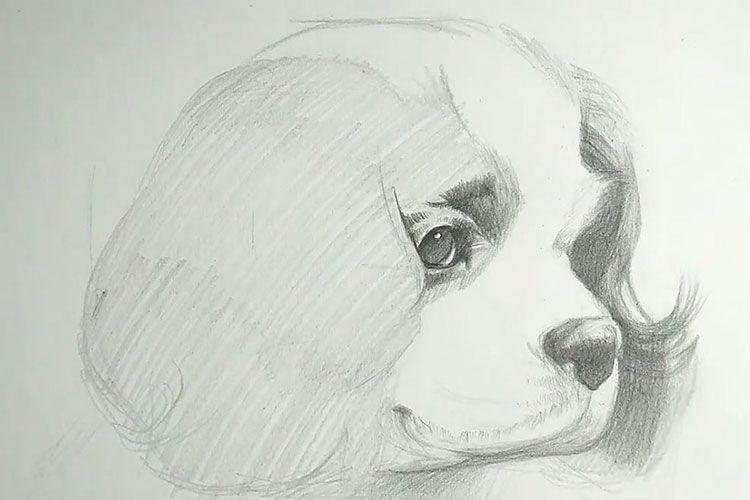 Нарисованная морда собаки