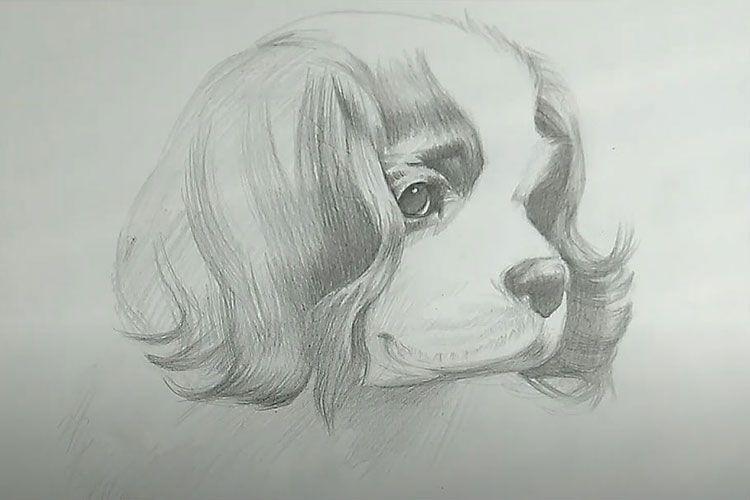 Рисунок собаки
